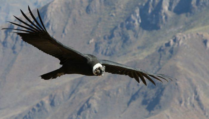 Chivay - Croix des condors - Puno