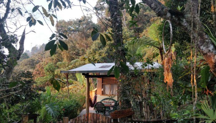 COROICO – VISITE D'UNE PLANTATION DE CAFE
